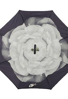Invertierter Regenschirm, Lotusblume