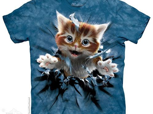 Durchbrechendes Kätzchen