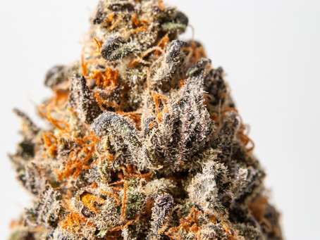 The 5 Best Strains to Look Out For in Chicago and Where to Find Them