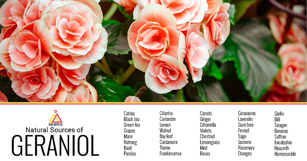 Natural Sources of Geraniol Terpene Isolate