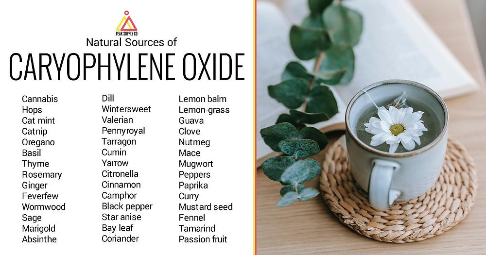Terpenes 101: Caryophyllene Oxide — natural sources