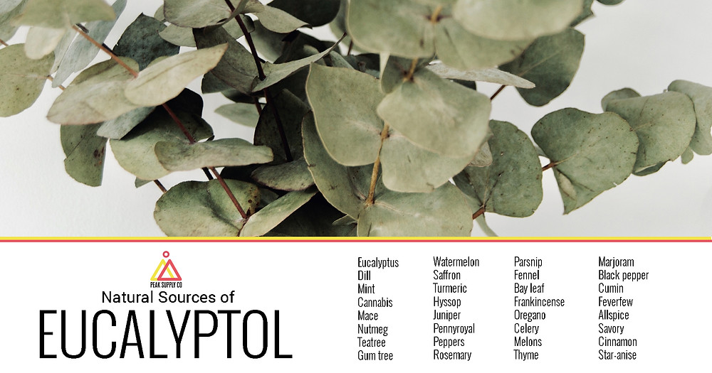 Natural sources of eucalyptol terpenes - cannabis strains with eucalyptol terpenes