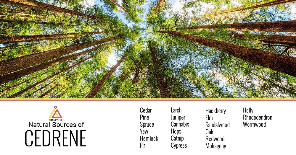 natural sources of cedrene terpenes