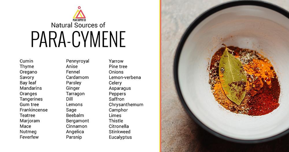 natural sources of para-cymene terpenes
