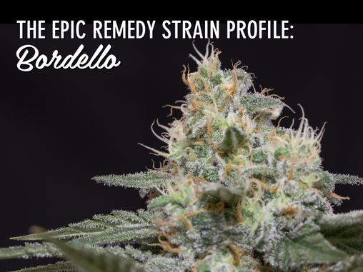 Epic Remedy Strain Profile: Bordello