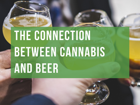 The Connection Between Cannabis and Beer