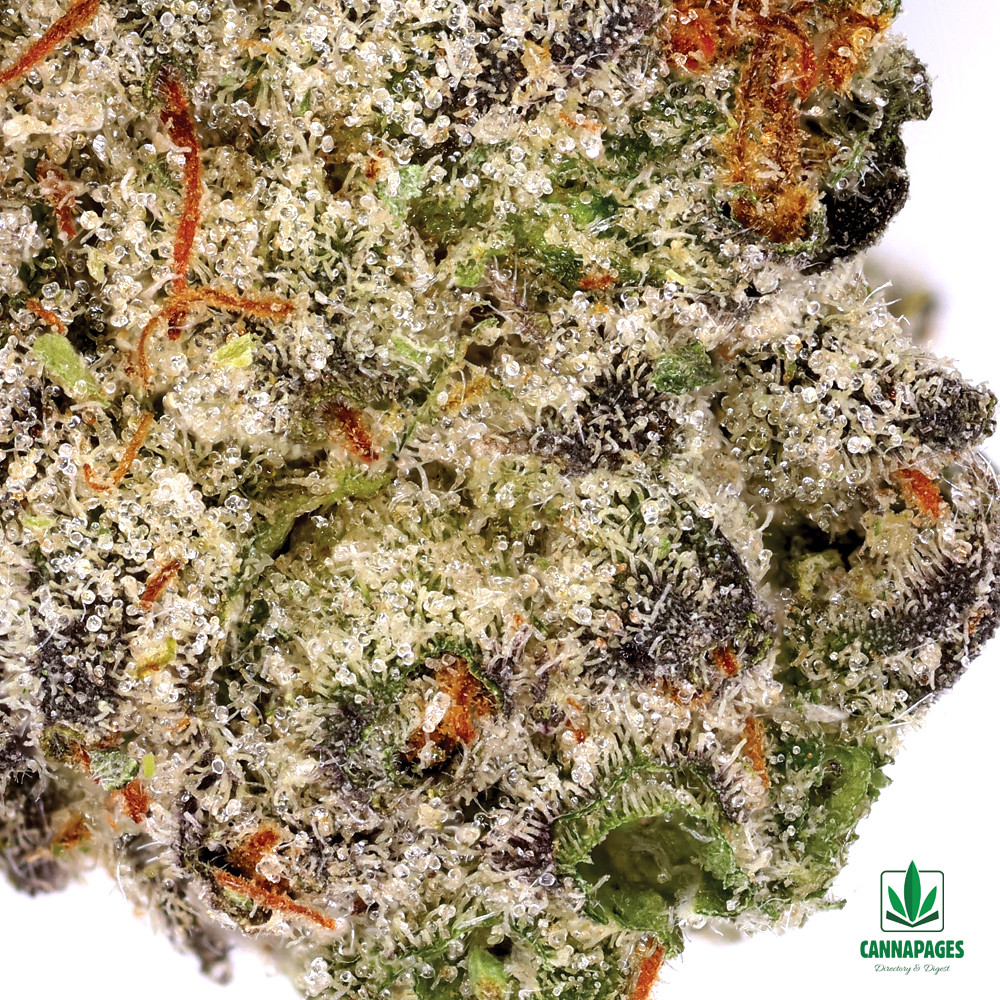Macro Shot of The Epic Remedy's Animal Roadkill #3 by Cannapages