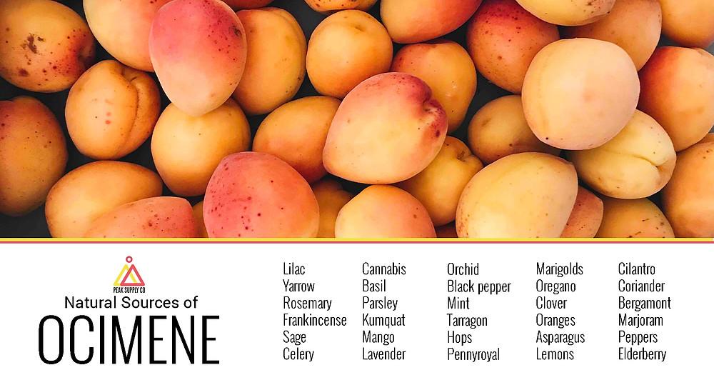 natural sources of ocimene terpenes by peak supply co