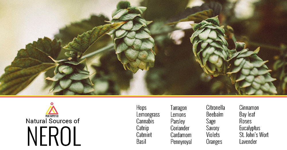 natural sources of nerol terpenes
