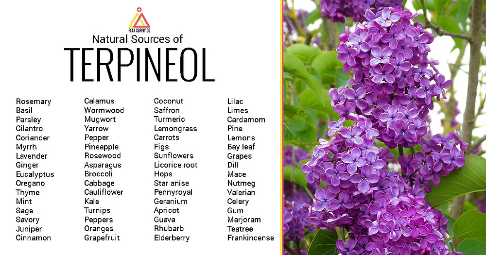 Natural Sources of Terpineol Terpene Isolates