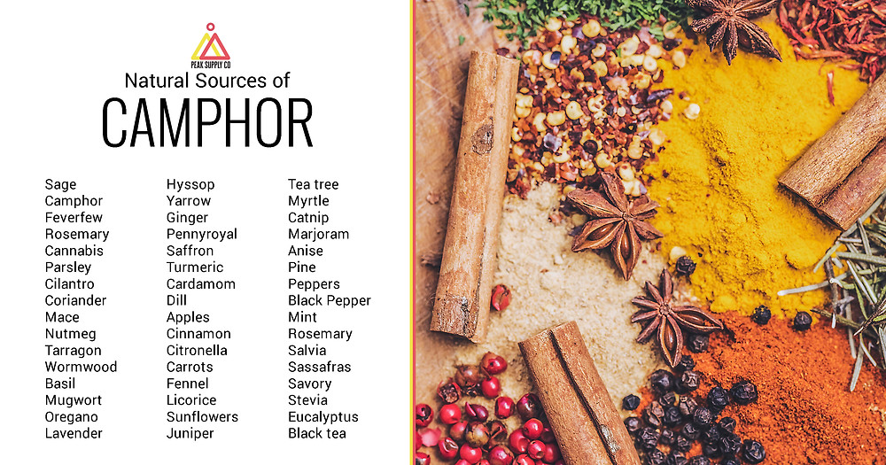 Natural Sources of Camphor Terpene Isolates