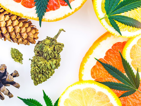 How Do Terpenes Affect The Body?
