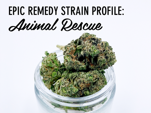 Epic Remedy Strain Profile: Animal Rescue
