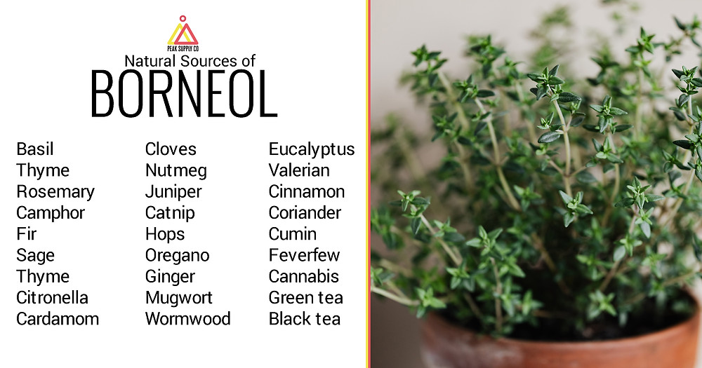 natural sources of borneol terpenes by peak supply co