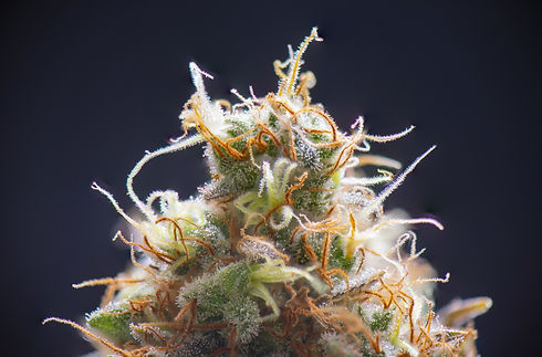 The Epic Remedy Cannabis Flowers