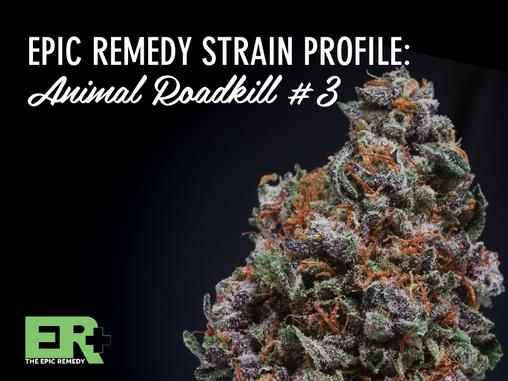 Epic Remedy Strain Profile: Animal Roadkill #3