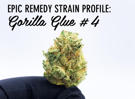 Epic Remedy Strain Profile - Gorilla Glue #4
