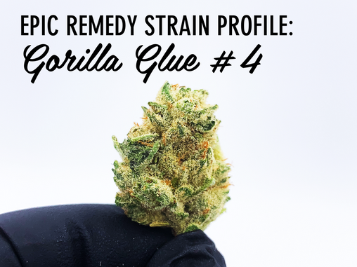 Epic Remedy Strain Profile - Gorilla Glue #4