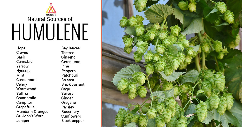Natural Sources of Humulene Terpene Isolate
