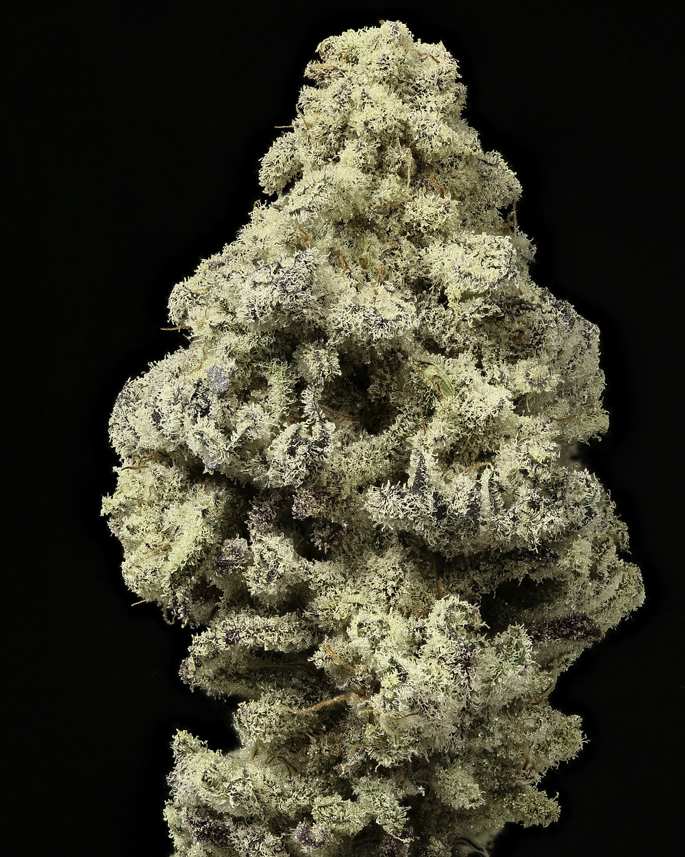 alien cream #2 strain profile and review by the epic remedy colorado springs' best dispensary