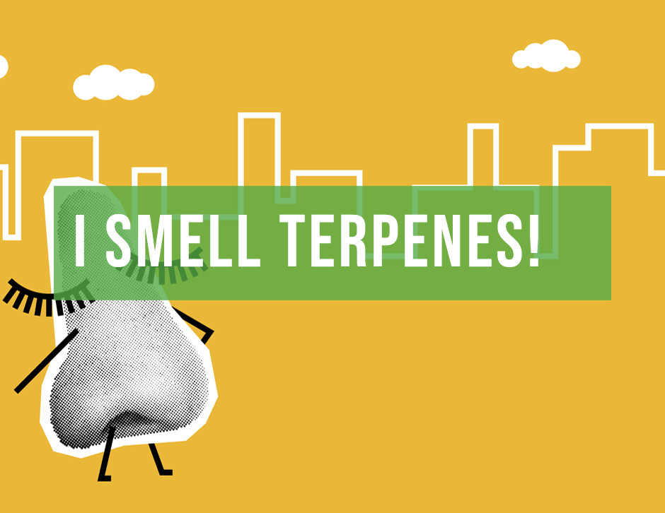 terpene resource for chicago by chi high tours chicago's best cannabis education tour