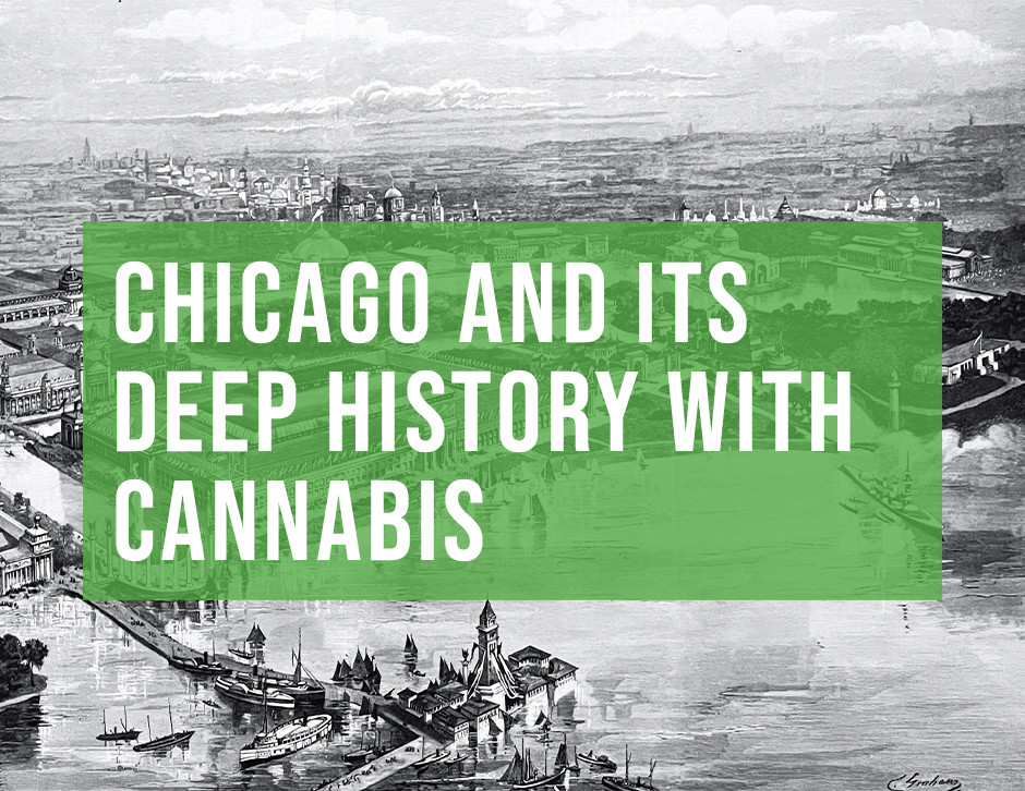 chicago cannabis history by chi high tours chicagos best cannabis education tour