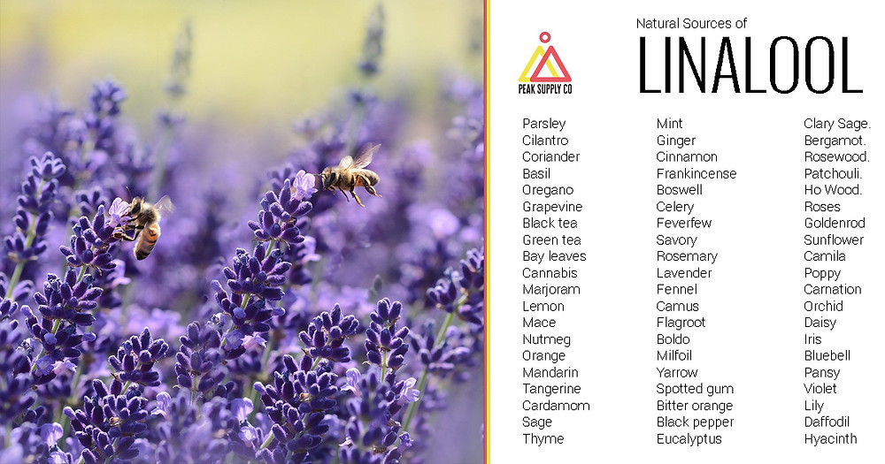 Natural Sources of Linalool Terpenes