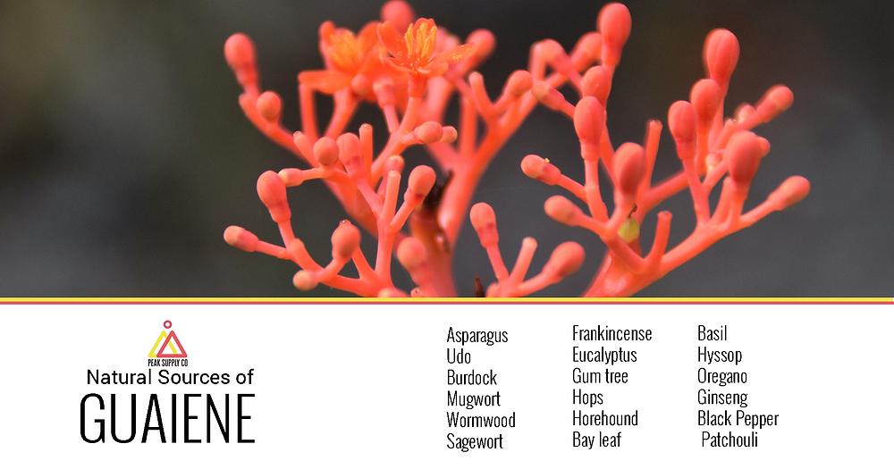 Guaiene terpene isolate information - Guaiene terpenes for sale by peak supply co