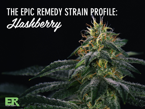 Epic Remedy Strain Profile: Hashberry