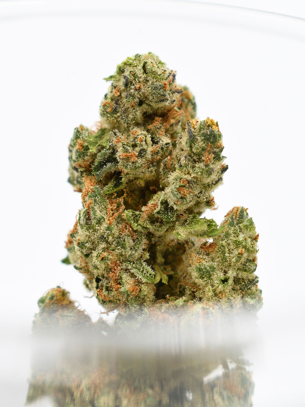 Jack Frost Flower by The Epic Remedy