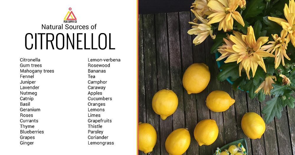 natural sources of citronellol terpenes