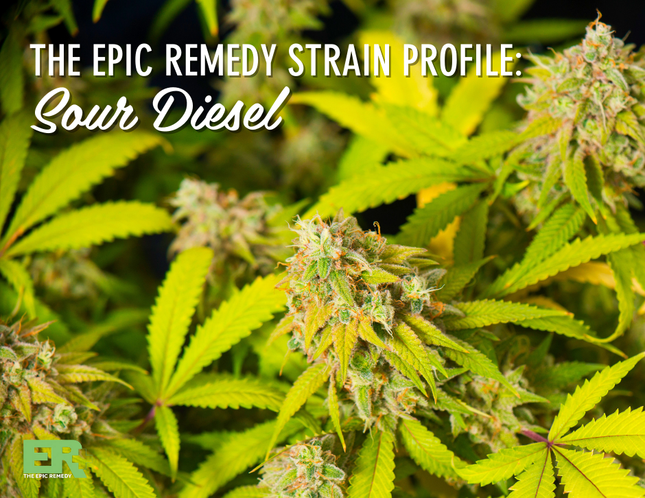 sour diesel strain profile and review by the epic remedy colorado springs best dispensary