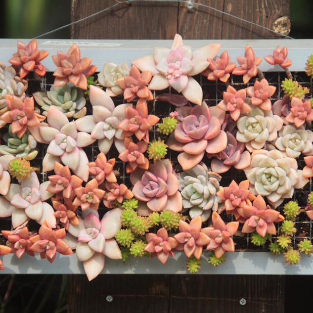 Decoración de la cama de flores