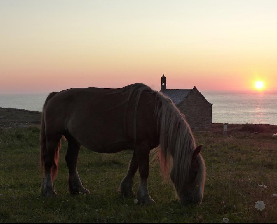 cheval au couchant