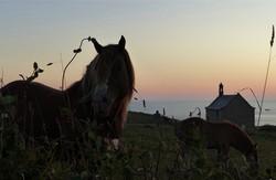 cheval au couchant3
