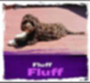 Fluff.png