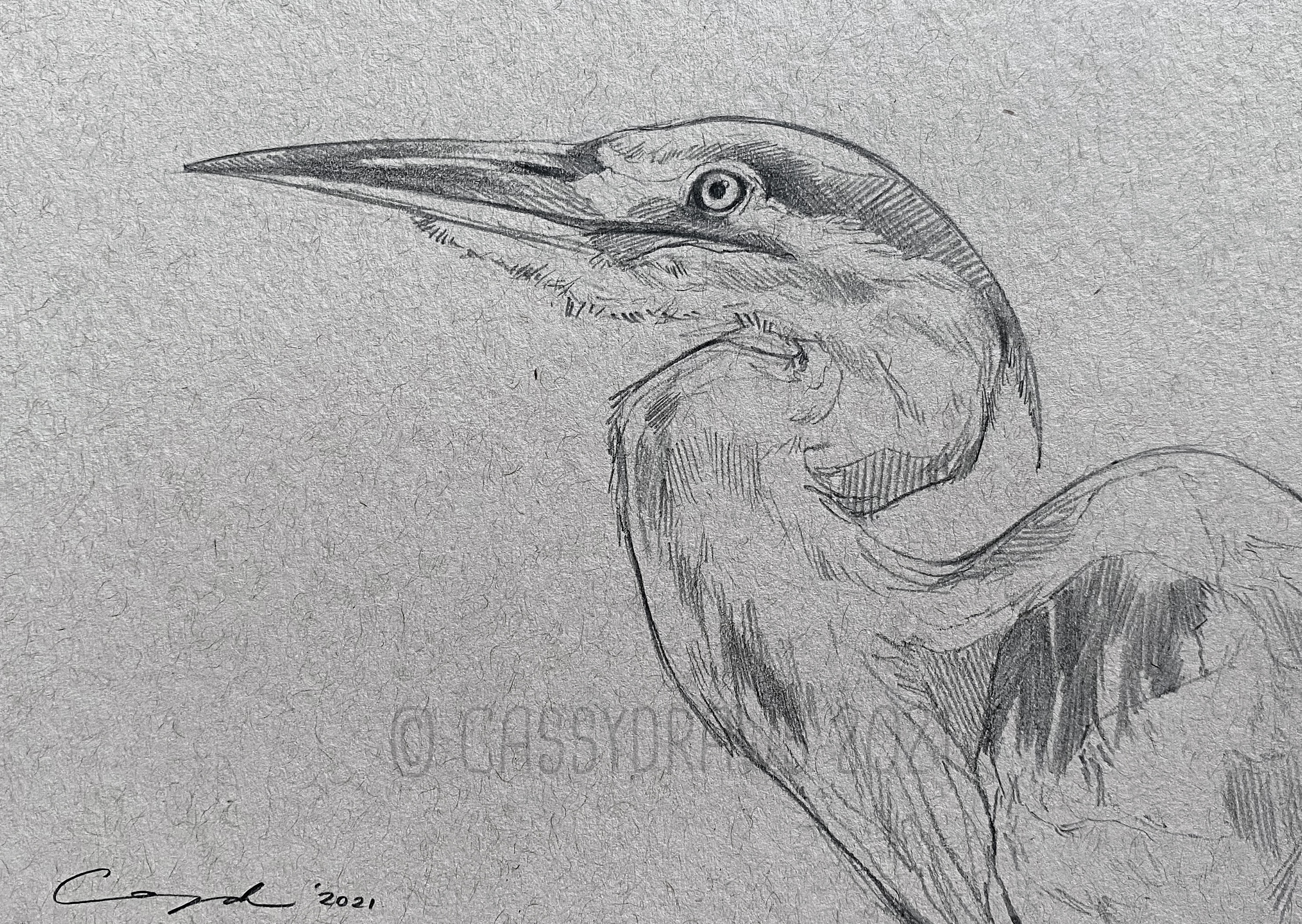 """Heron Sketch"""