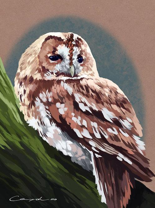 """""""Sleepy Owl"""" - Art Print."""