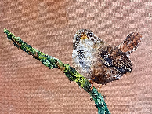"""""""What are you looking at?"""" Wren - Acrylic Painting."""