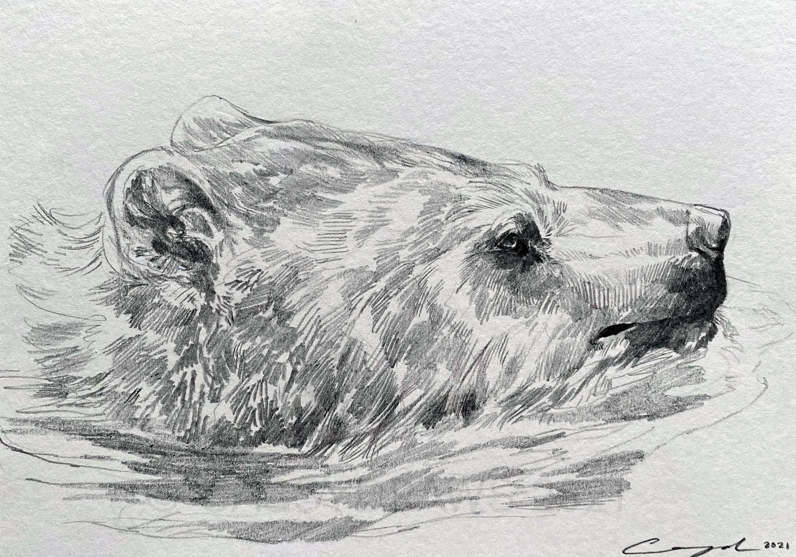 """Swimming Bear"""