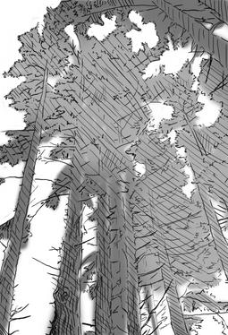 Looking Up Sketch