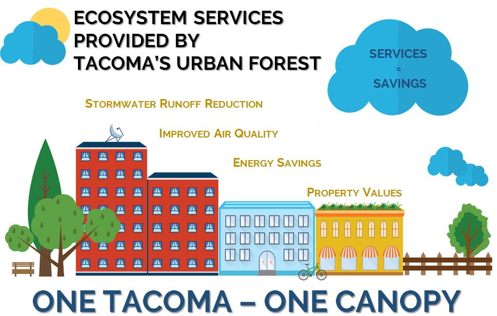 """The trees throughout Tacoma constitute an """"urban forest"""". These trees and the urban forest as a whole provide ecosystem services. These services include the reduction of stormwater volume by capturing precipitation in the tree's canopy and increasing infiltration rates; improving air quality by absorbing pollutants and particulate matter; reducing energy use by shading structures in the summer and reducing winds in the winter; and increasing property values due to the collective benefits that trees provide"""