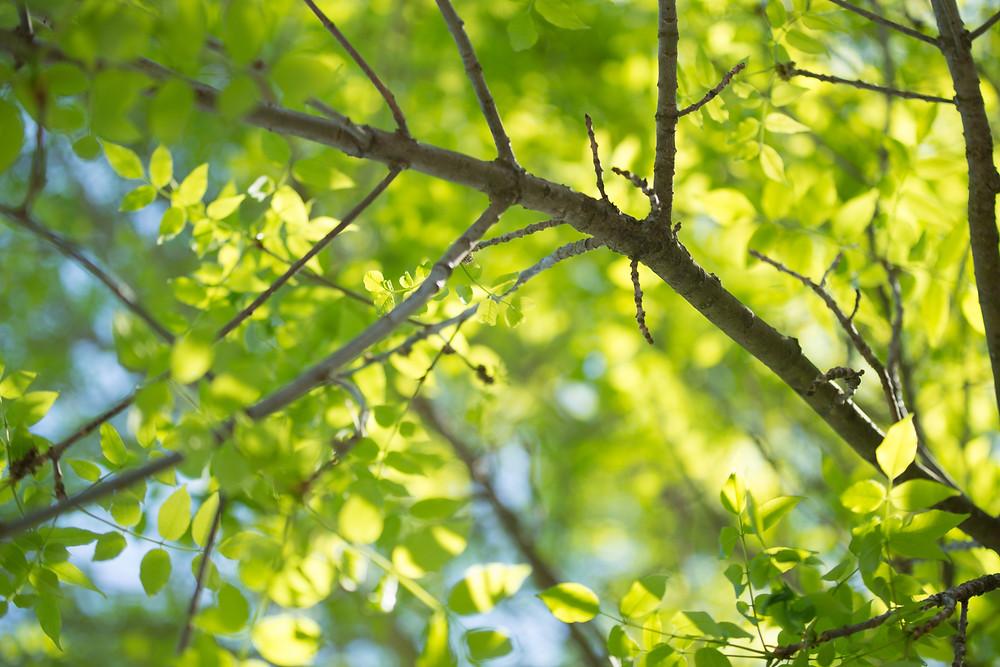 tree branch in daytime