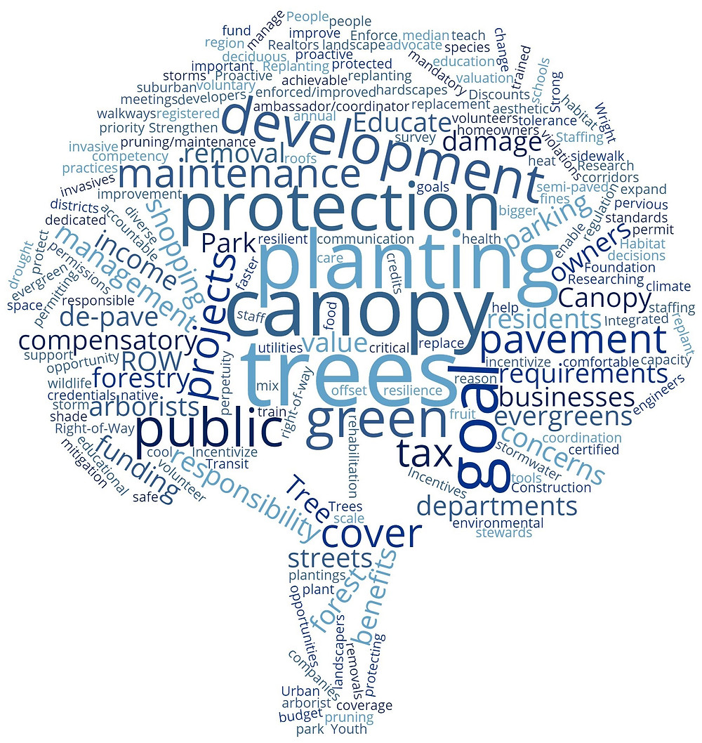 A summary of the first community meeting for the Urban Forest Management Plan was completed. The words from the summary were entered into a word cloud generator at wordclouds.com to identify the most common words, phrases, and themes discussed during the meeting