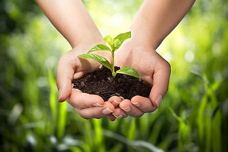 pflanzenschutz.jpeg