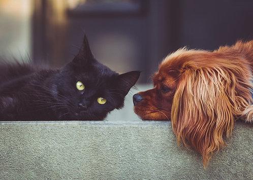 Soin Reiki Kundalini  pour animaux / Kundalini Reiki Healing for pets