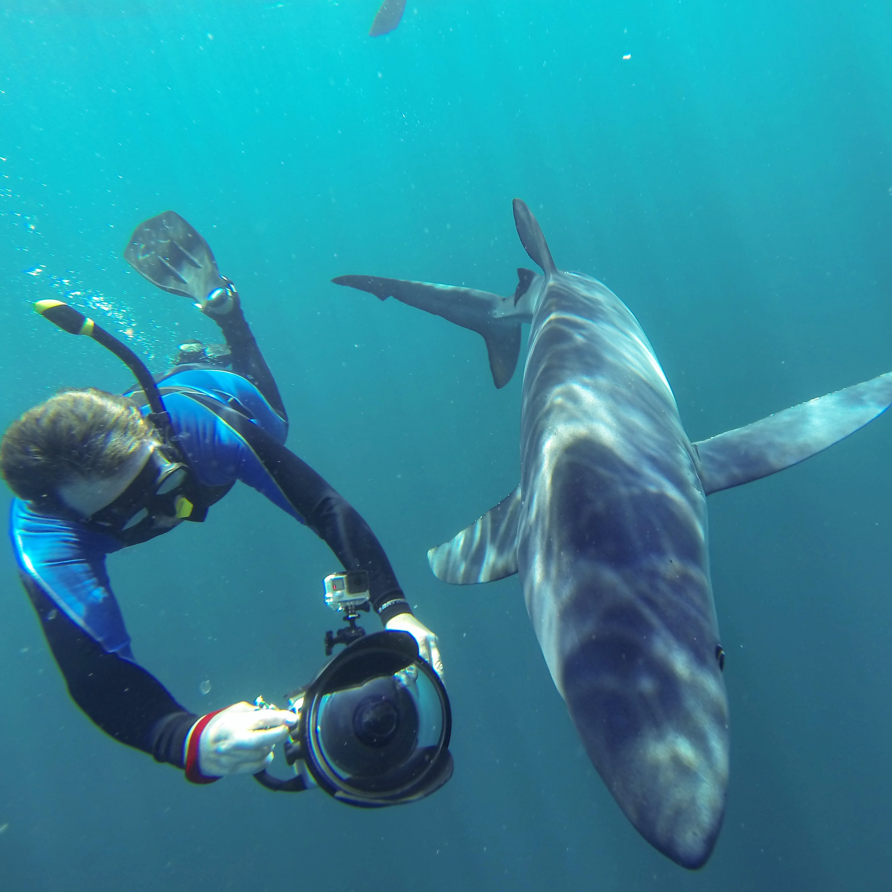Extended Day Shark Dive