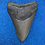 Thumbnail: MEGALODON Shark Tooth Fossil