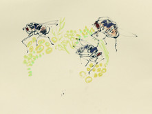 Flies and Fennel