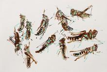 Meadow grasshopper studies. Sharpham